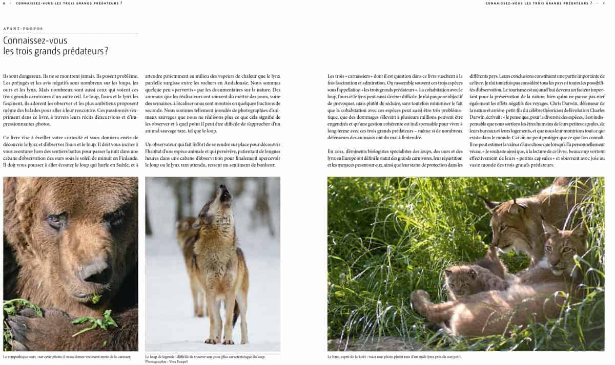 Ours Loup Lynx Ils Sont De Retour