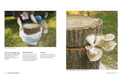 je cultive mes champignons dp2 1