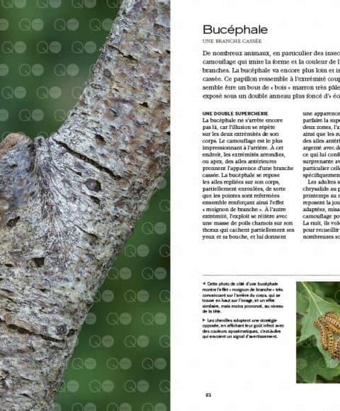 camouflage livre nature animaux